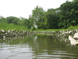 Healthier marshes which have a more diverse plant community